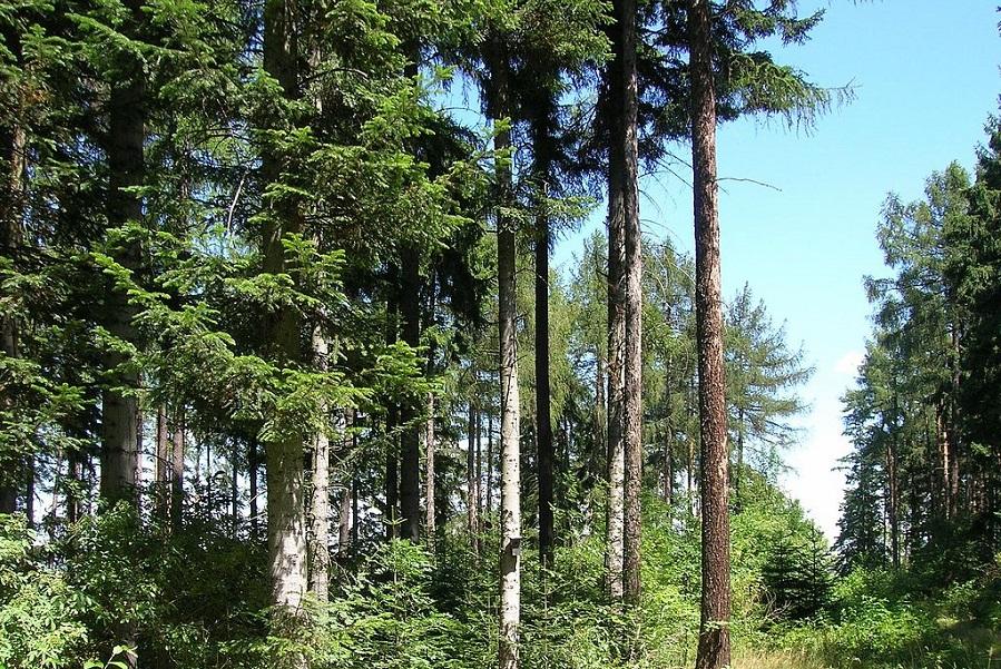 """""""PiS to piła i siekiera"""". Sadźmy drzewa!"""